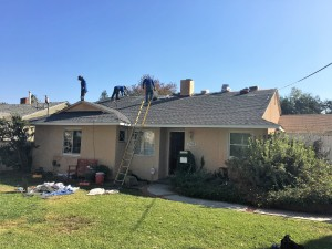 AFTER New ROOF in process- No TREE